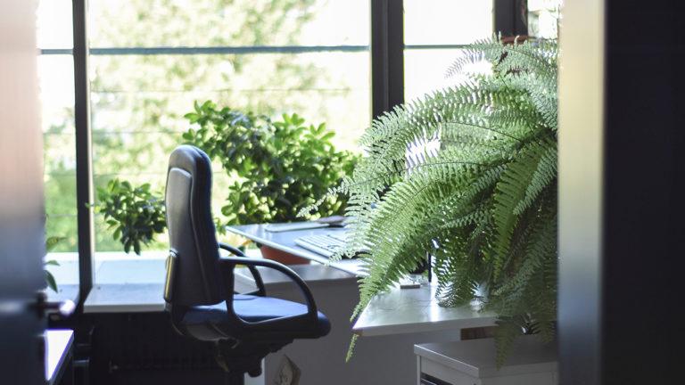 Главная офисная привилегия – естественное освещение - 1