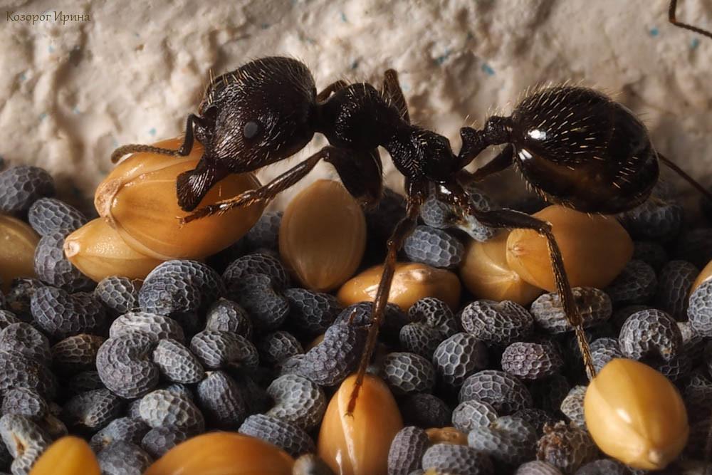 IT в мире животных: поиск еды муравьями и протокол TCP-IP - 1