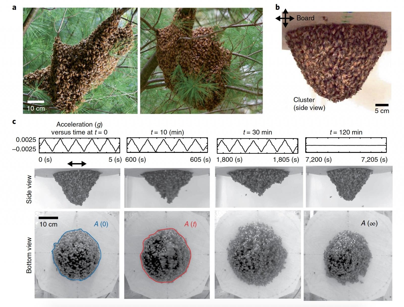 Это правильные пчелы: механическая адаптация к динамическому воздействию - 3