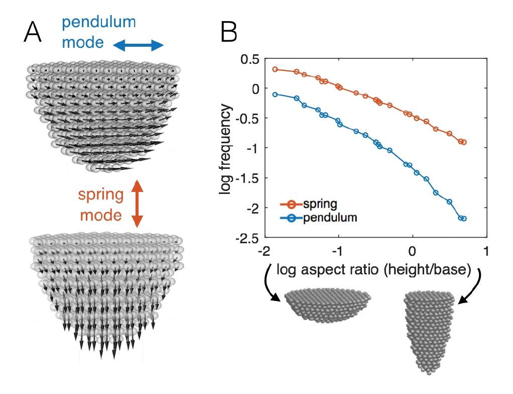 Это правильные пчелы: механическая адаптация к динамическому воздействию - 7