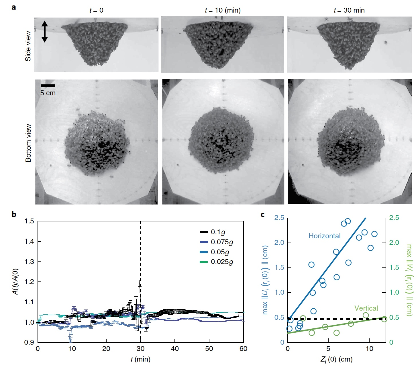 Это правильные пчелы: механическая адаптация к динамическому воздействию - 9