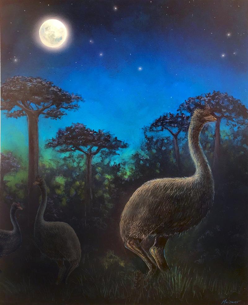 Крупнейшие птицы в истории были практически слепыми