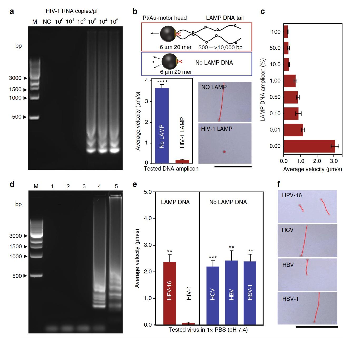 Анализ скорости молекулярных микромоторов для диагностики ВИЧ - 12