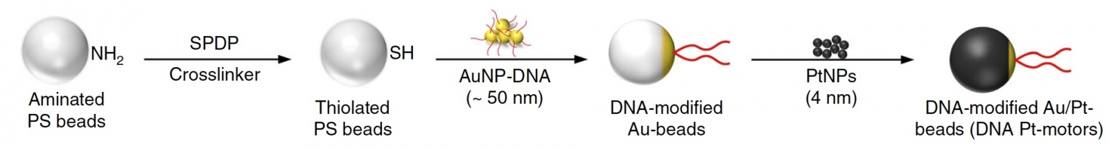 Анализ скорости молекулярных микромоторов для диагностики ВИЧ - 4