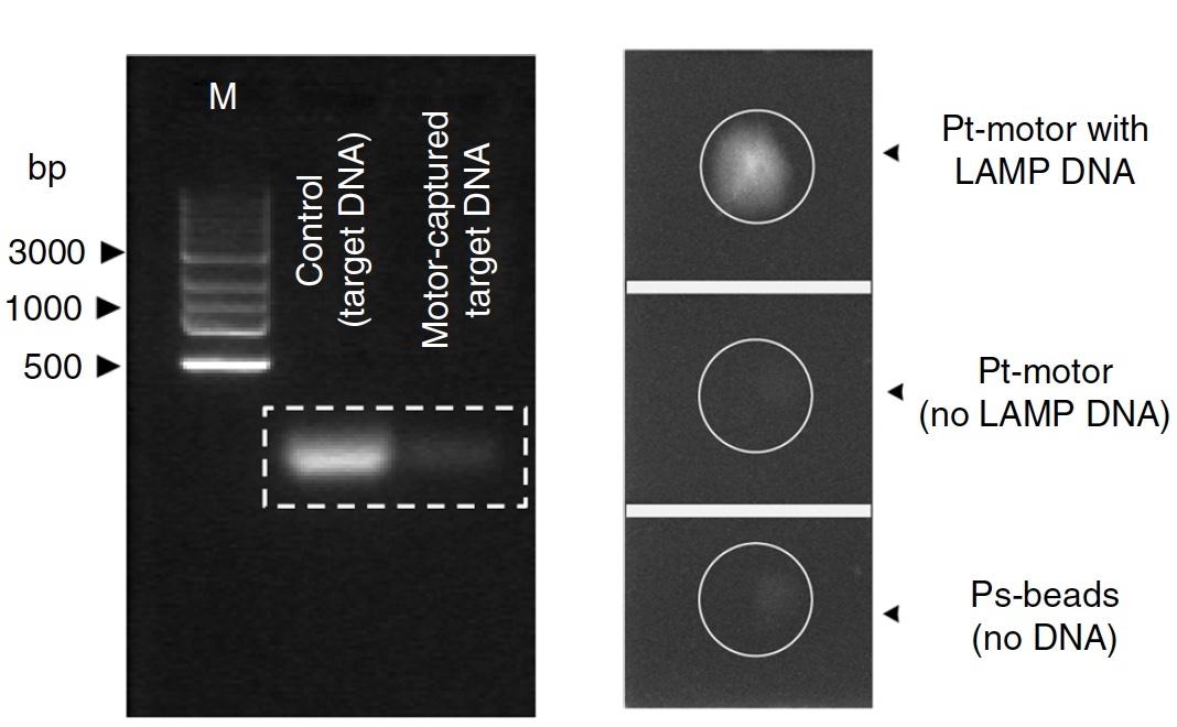 Анализ скорости молекулярных микромоторов для диагностики ВИЧ - 6