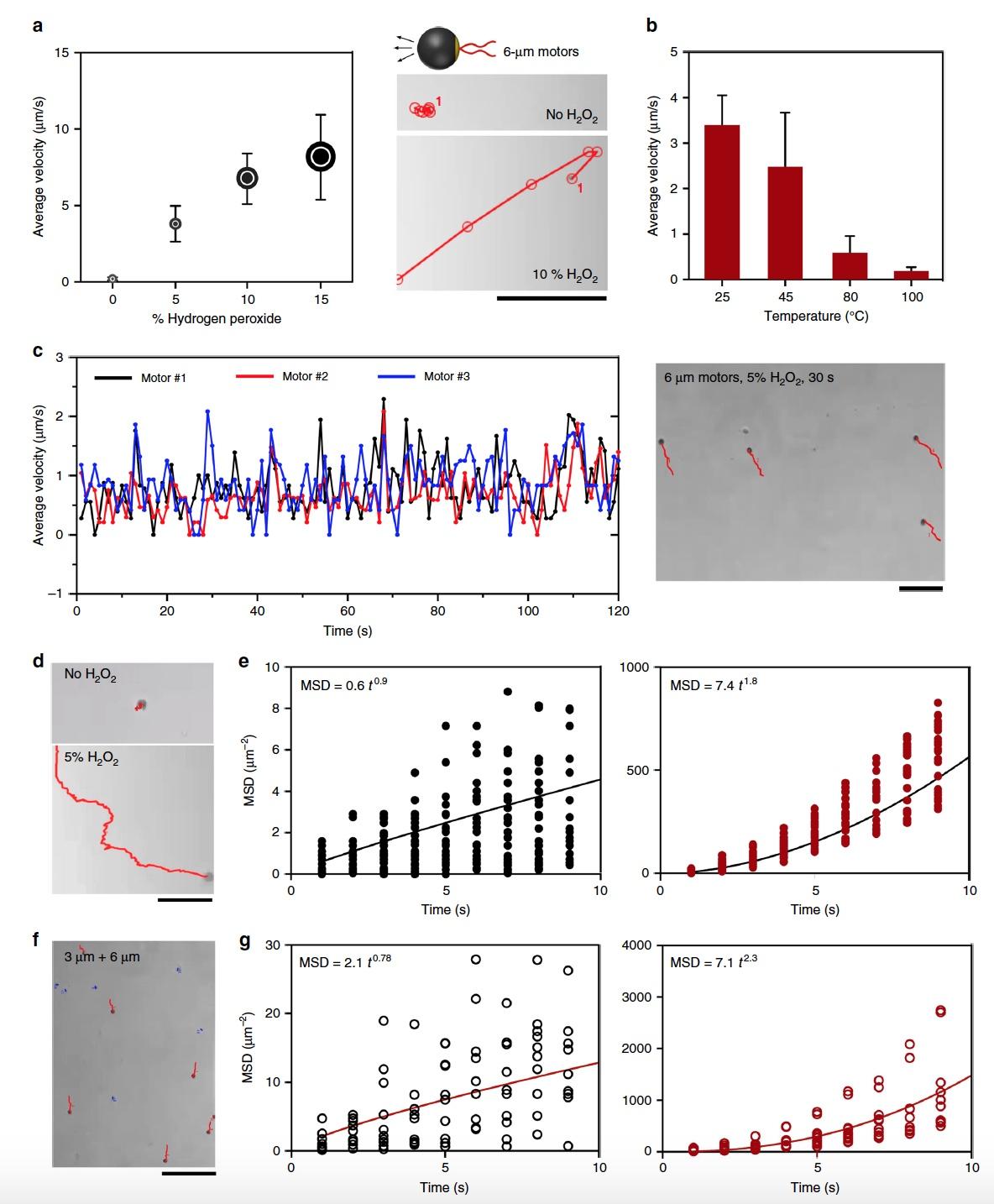 Анализ скорости молекулярных микромоторов для диагностики ВИЧ - 8