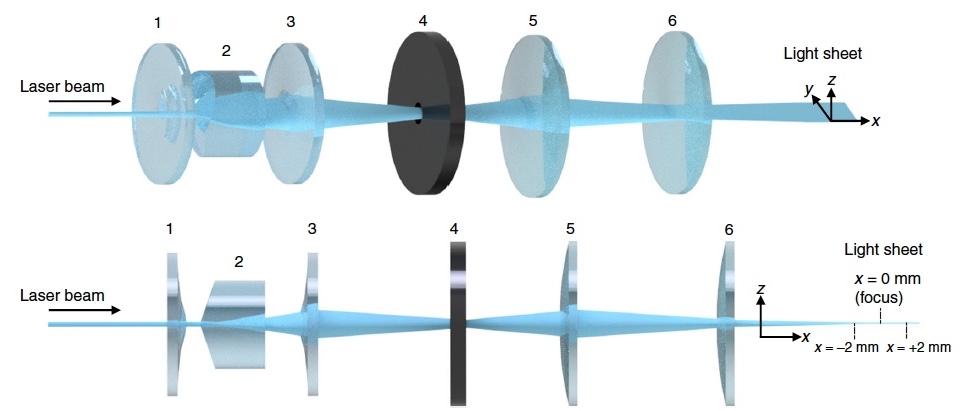 «Невидимые» мухи: новый метод изучения нервной системы посредством депигментации тканей - 6
