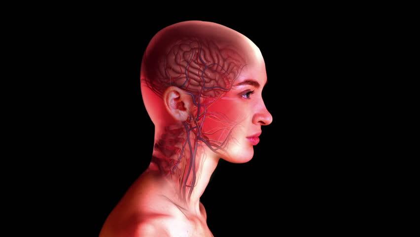 «Невидимые» мухи: новый метод изучения нервной системы посредством депигментации тканей - 1