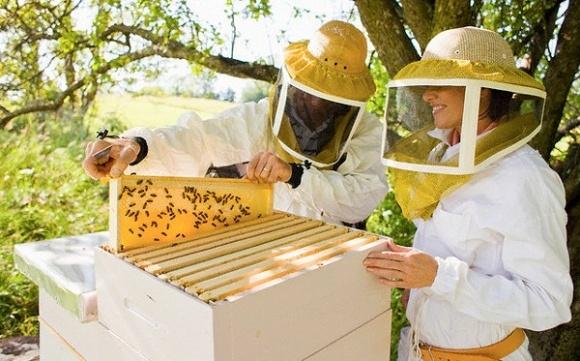 Пчеловоды за работой