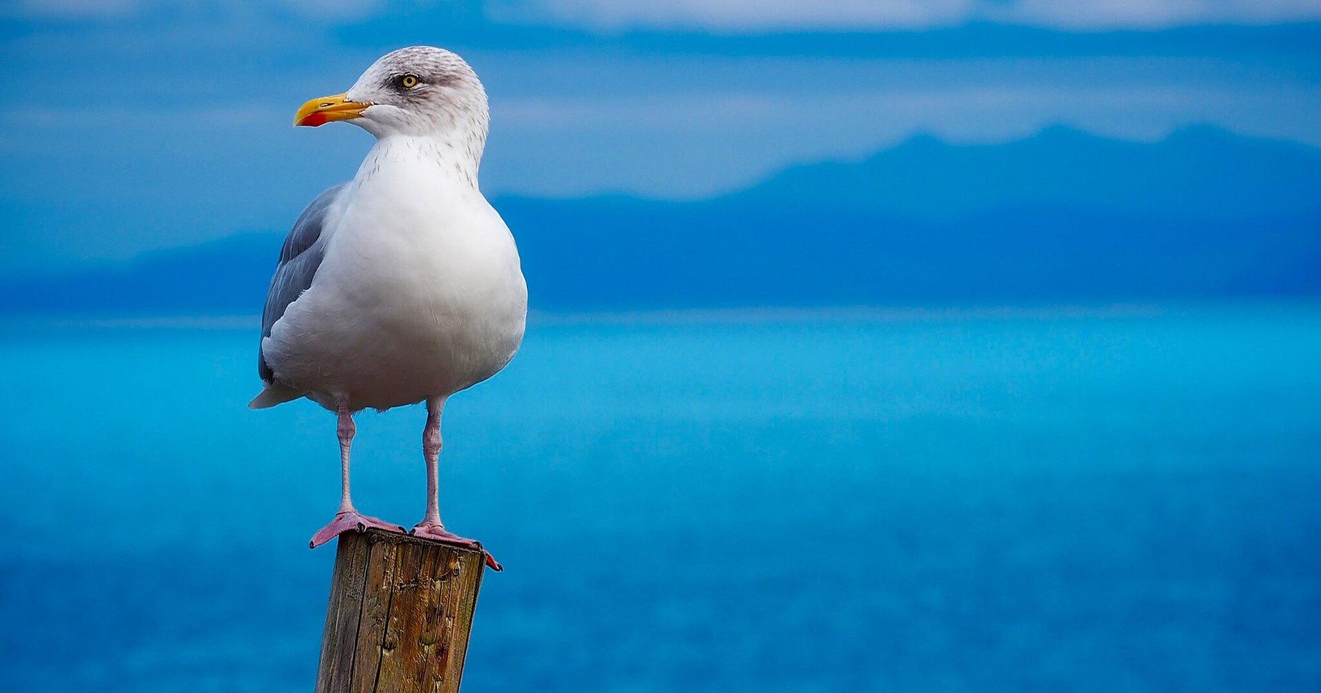 Почему морским птицам не вредит морская вода и еще 9 удивительных фактов