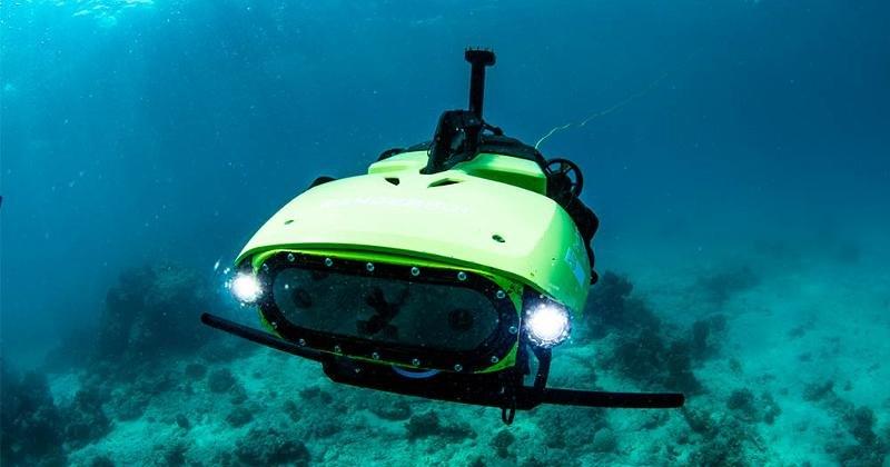 У берегов Австралии начался сев кораллов