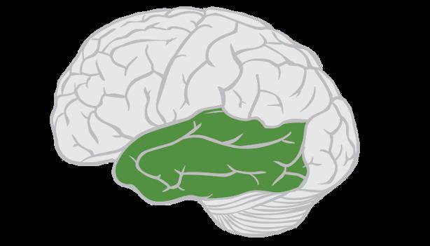 Откуда берется креативность: анализ активности альфа-волн мозга во время RAT-тестов - 4