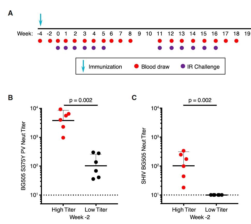 На шаг ближе к вакцине от ВИЧ: исследование титров сывороточных нейтрализующих антител у обезьян - 4