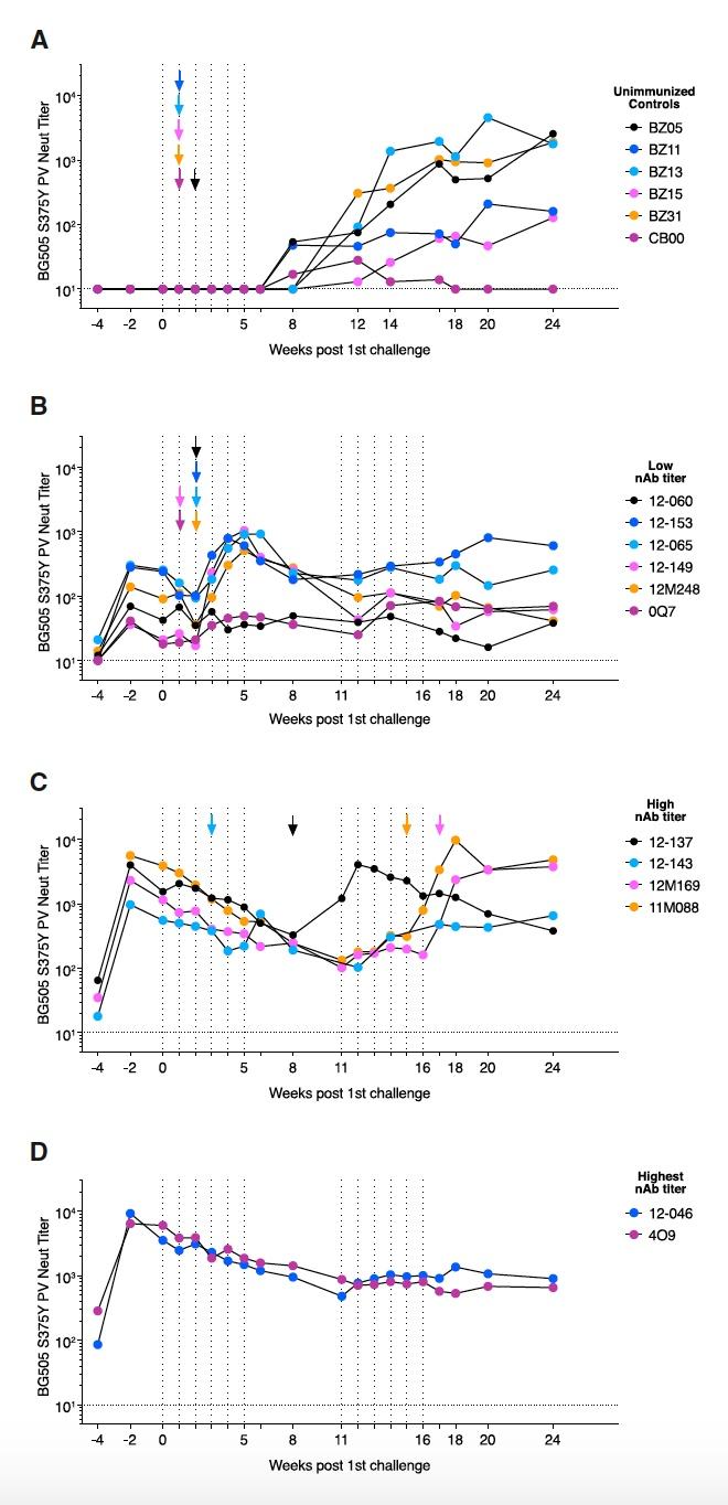 На шаг ближе к вакцине от ВИЧ: исследование титров сывороточных нейтрализующих антител у обезьян - 6
