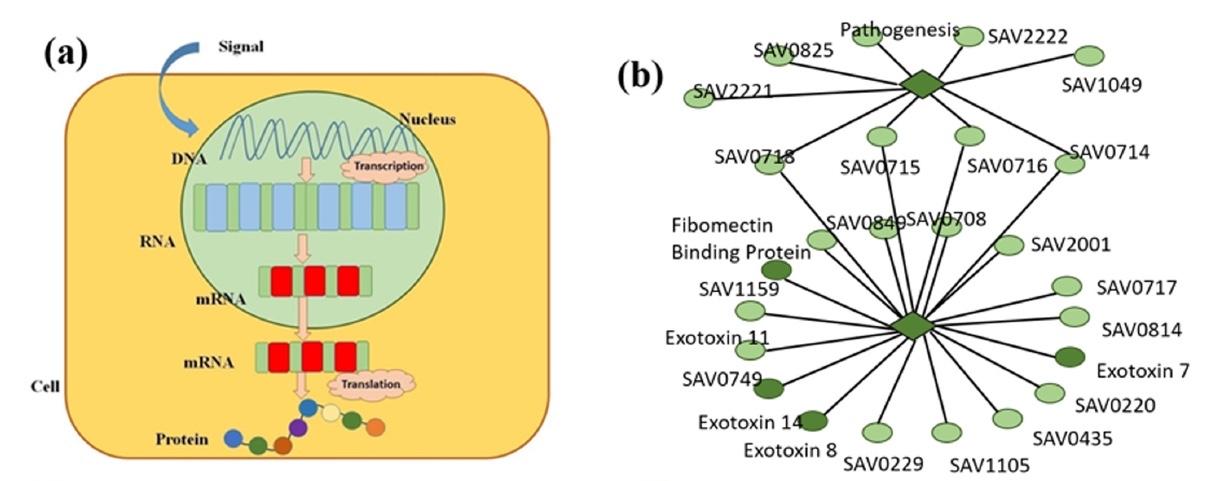 Генетика сорта Романеско: фрактальная математическая модель экспрессии генов - 4