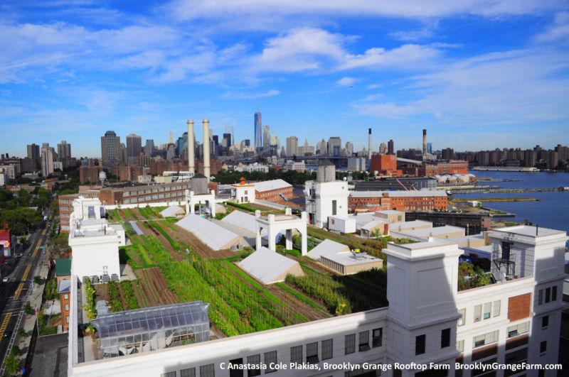 Городские фермы могут быть чрезвычайно эффективными, но не сейчас - 1