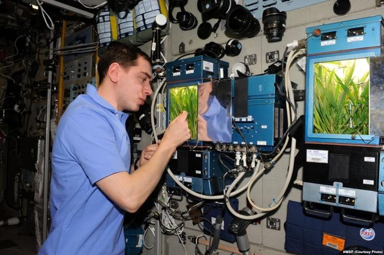 Утраченную с кораблём «Прогресс» оранжерею для МКС создать заново, вероятно, не удастся