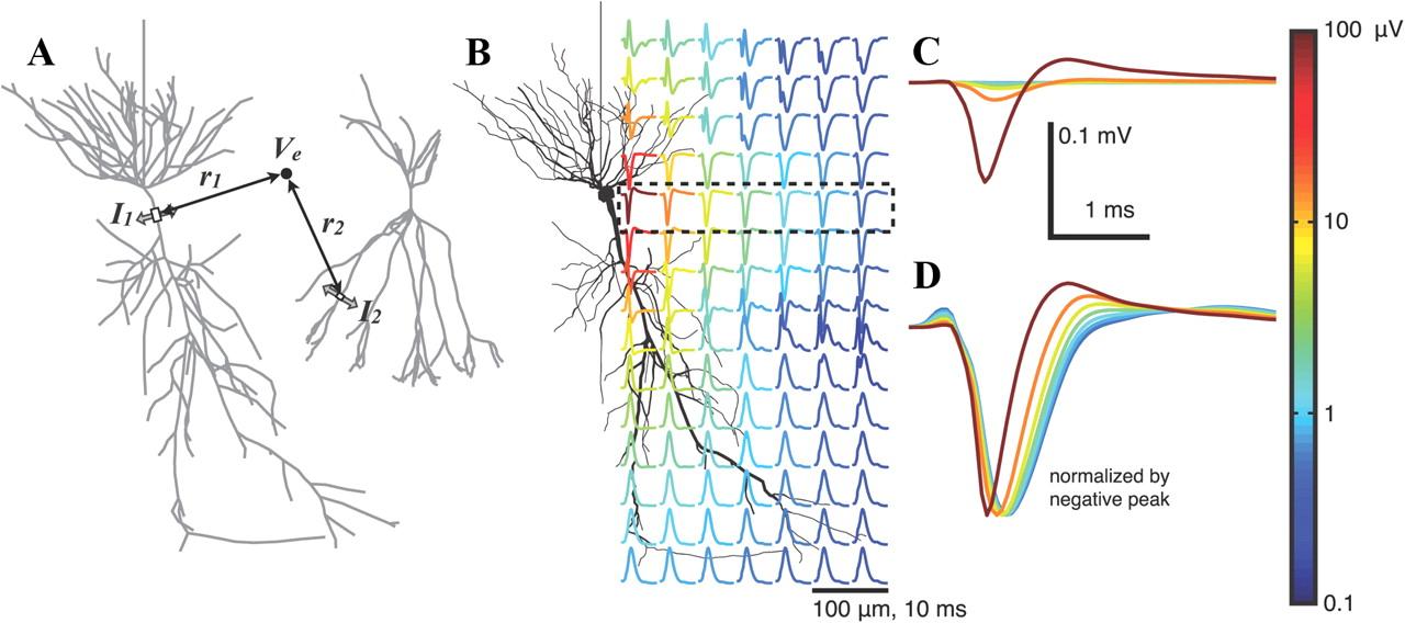 Микроэлектроника, нейрофизиология и машинное обучение, взболтать, но не перемешивать - 1