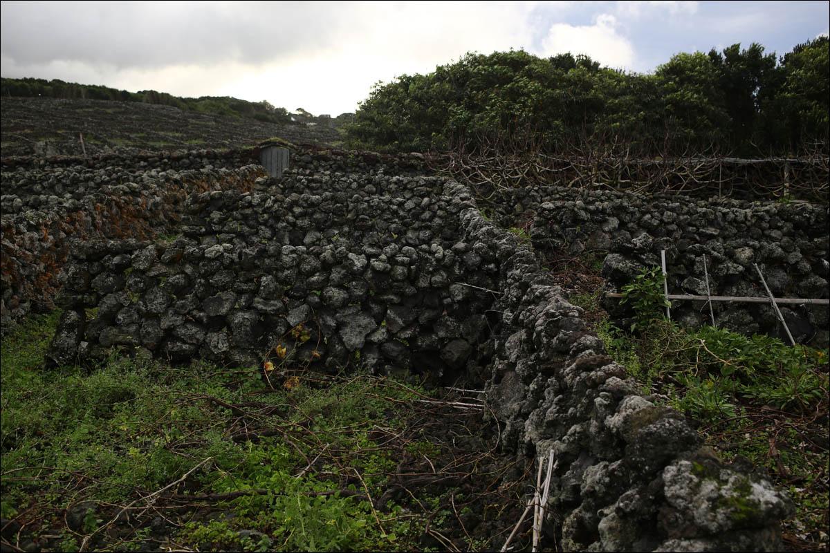 Азоры: последний резерв флоры в середине Атлантического океана - 10