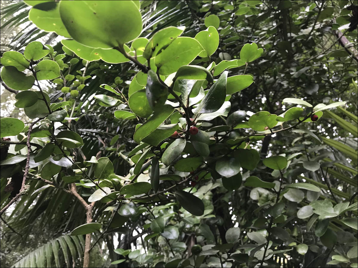 Азоры: последний резерв флоры в середине Атлантического океана - 22