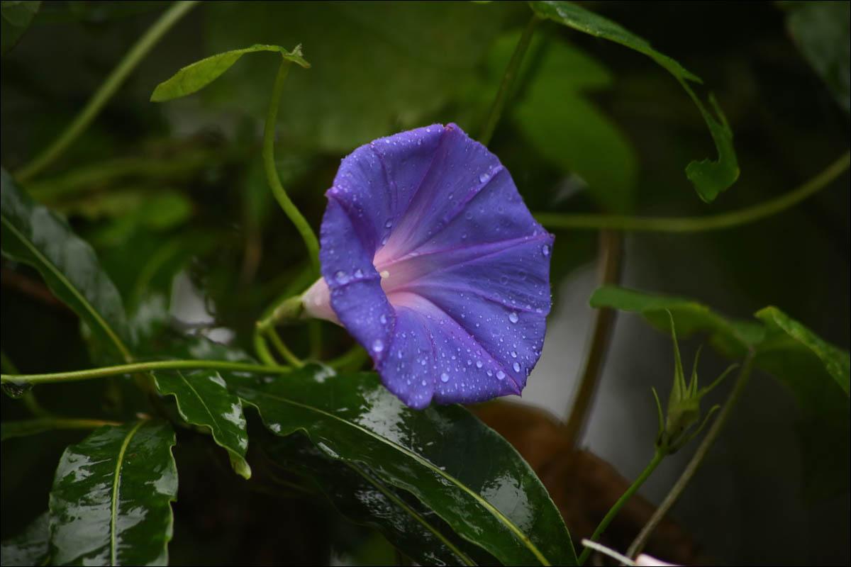 Азоры: последний резерв флоры в середине Атлантического океана - 25