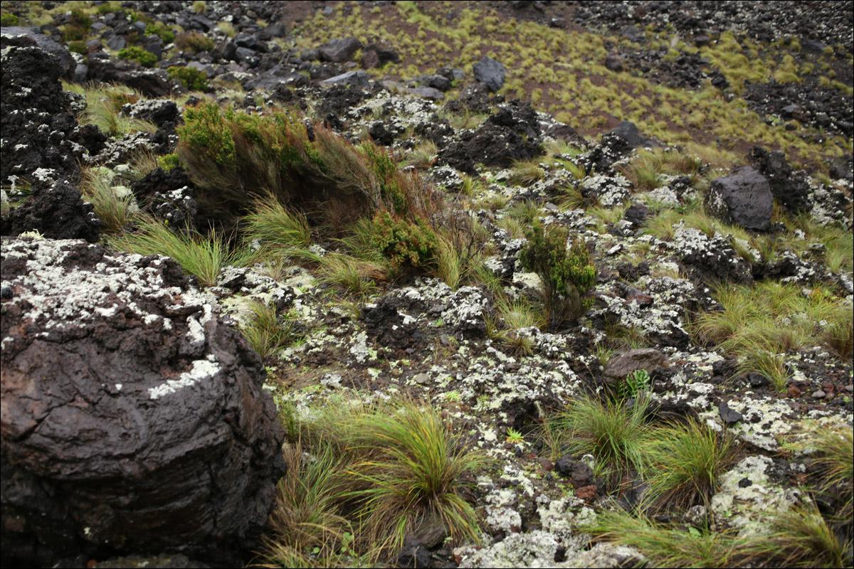 Азоры: последний резерв флоры в середине Атлантического океана - 26
