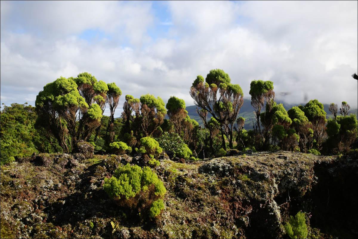 Азоры: последний резерв флоры в середине Атлантического океана - 27