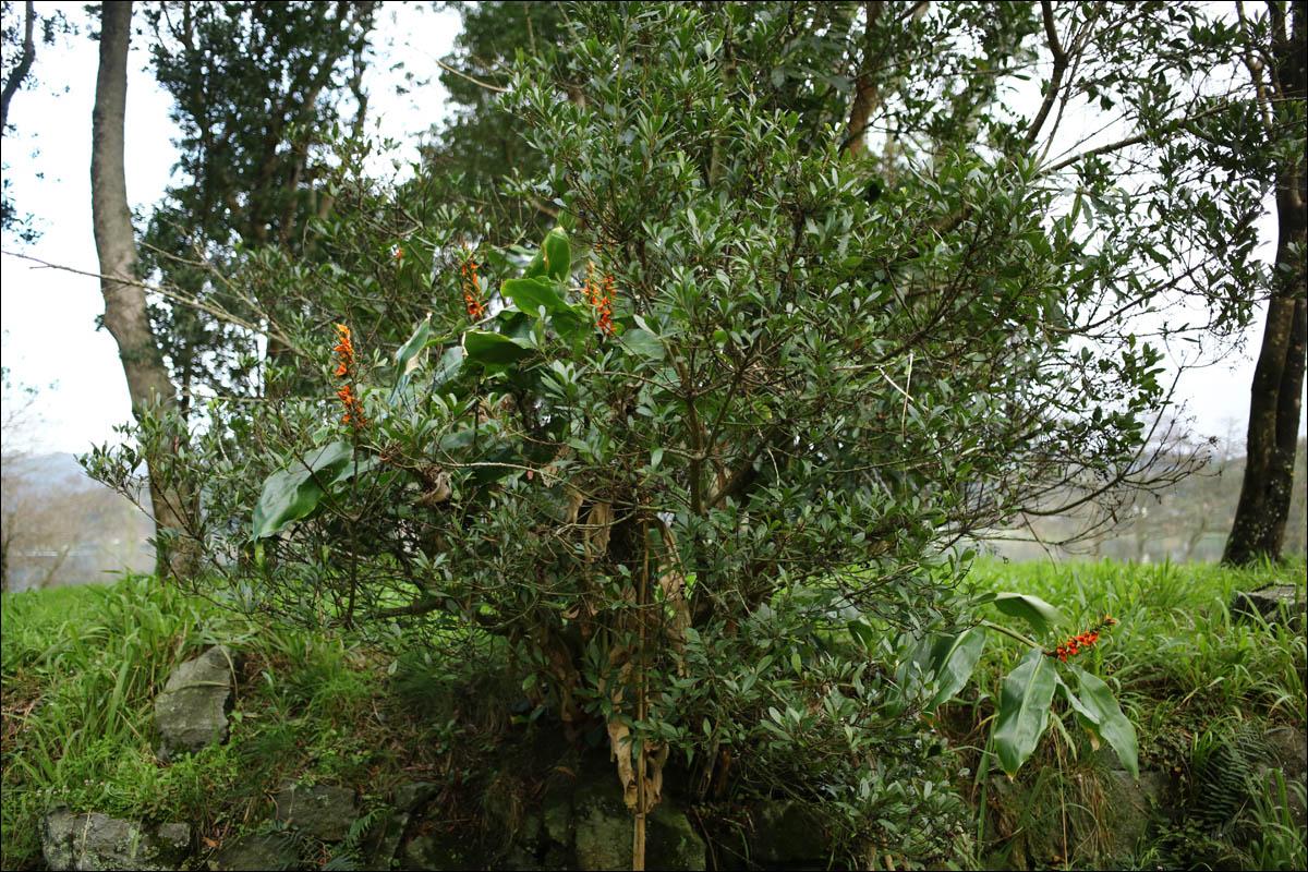 Азоры: последний резерв флоры в середине Атлантического океана - 28