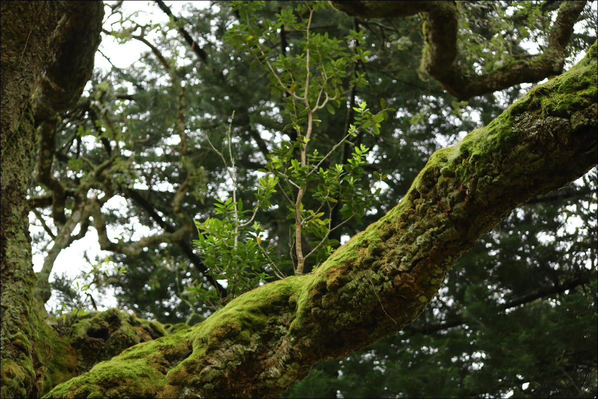 Азоры: последний резерв флоры в середине Атлантического океана - 33
