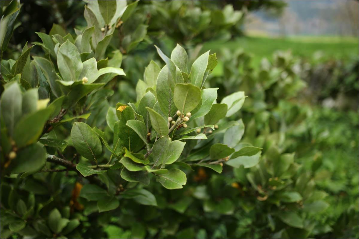 Азоры: последний резерв флоры в середине Атлантического океана - 34