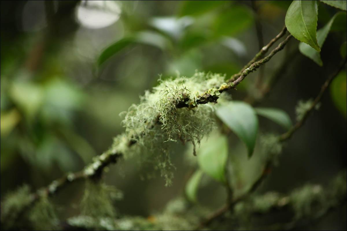 Азоры: последний резерв флоры в середине Атлантического океана - 36