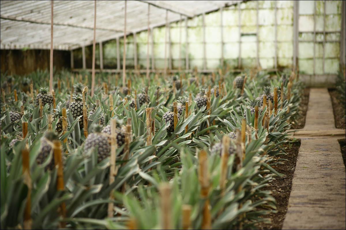 Азоры: последний резерв флоры в середине Атлантического океана - 37