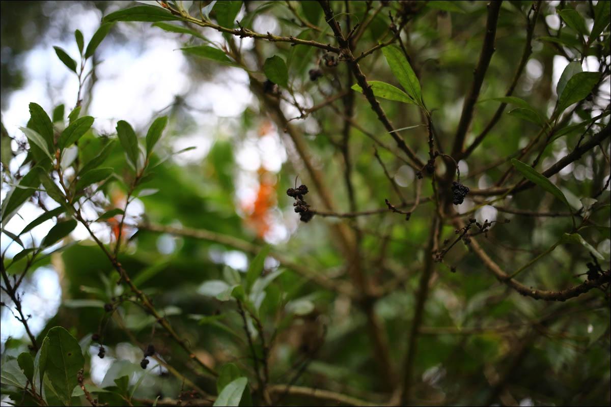 Азоры: последний резерв флоры в середине Атлантического океана - 39