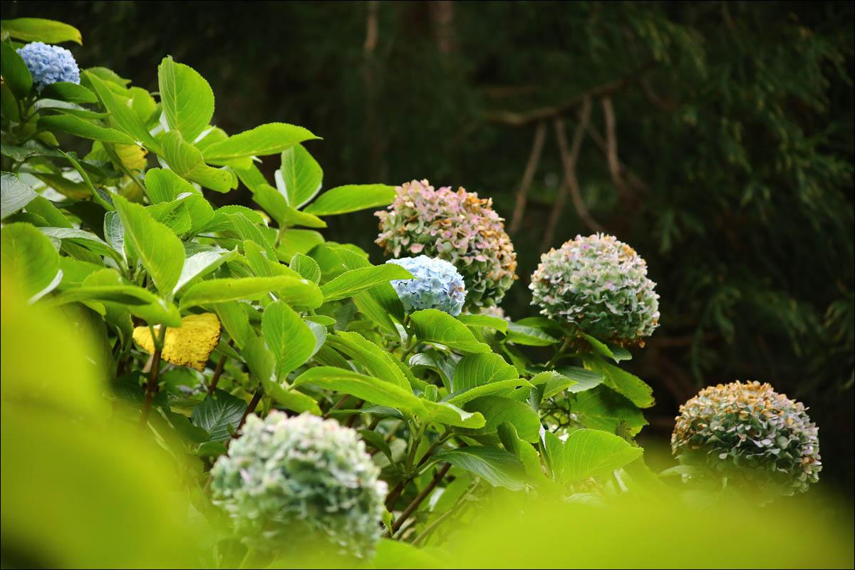 Азоры: последний резерв флоры в середине Атлантического океана - 61