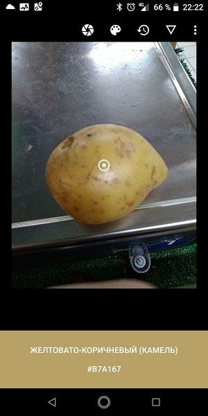 Как правильно купить картошку, если ты дальтоник - 6