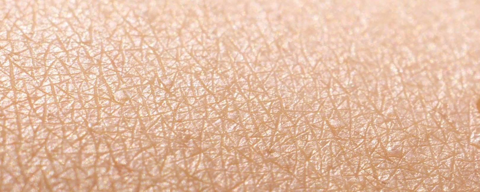 Математика кожи: выращивание эпидермиса на основе математического моделирования - 1