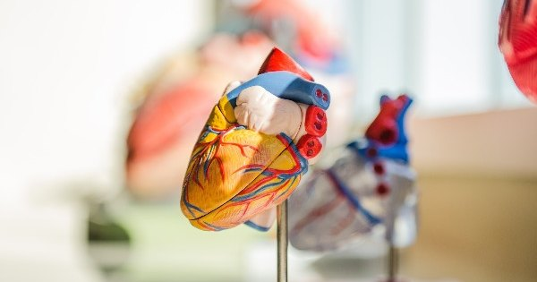 Патент недели: искусственная мышца для настоящего сердца