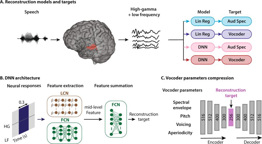 Активность мозга человека впервые транслировали в чёткую речь - 1