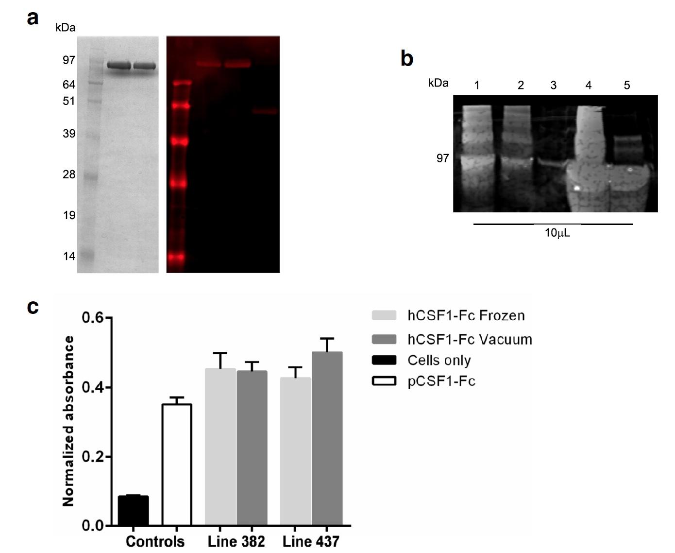 Генетика и куры: белок CSF1-Fc человека в яичном белке - 5