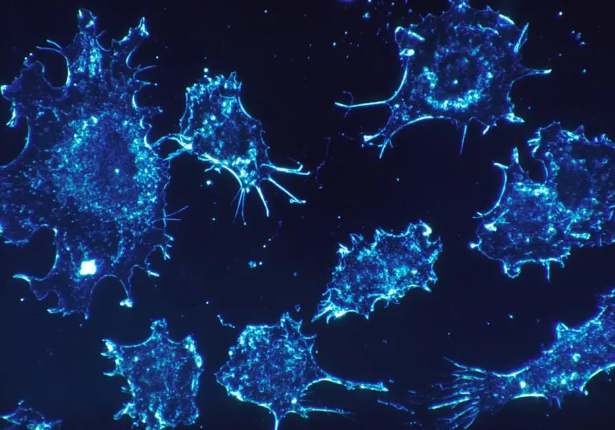 Израильские учёные разработали универсальное лечение против рака - 1