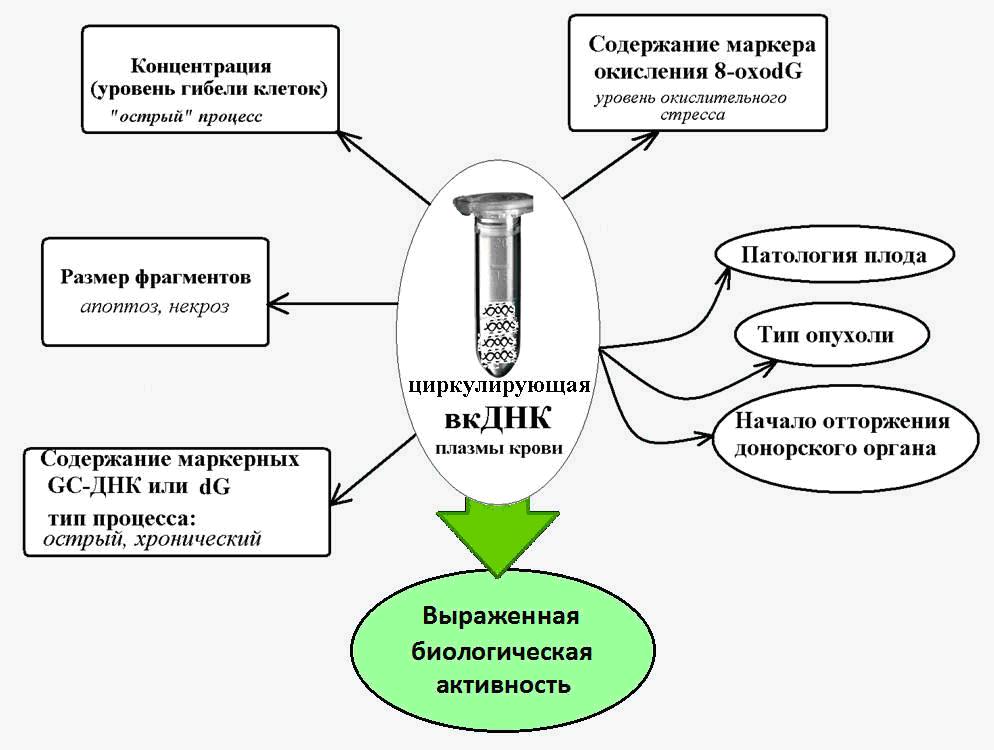 Внеклеточная ДНК, как биомаркер старения и различных патологий - 2