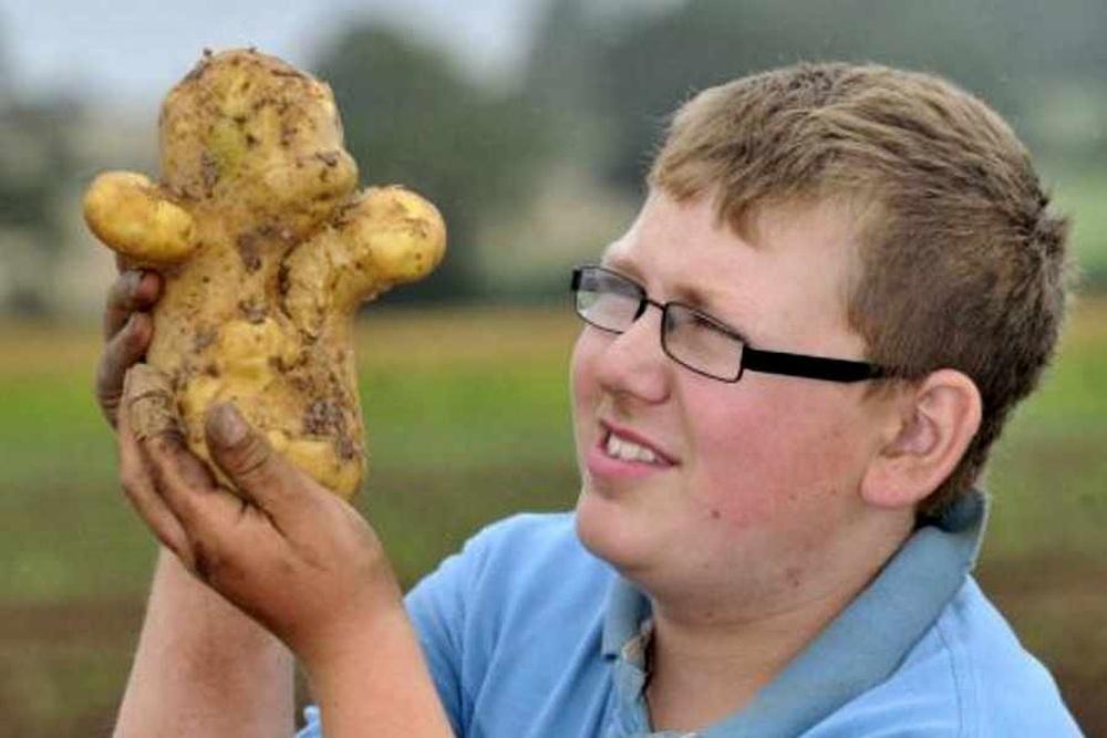 Заметки фитохимика. Картофель. Часть вторая. Рассказы про белки-жиры или «День сыроеда» - 1
