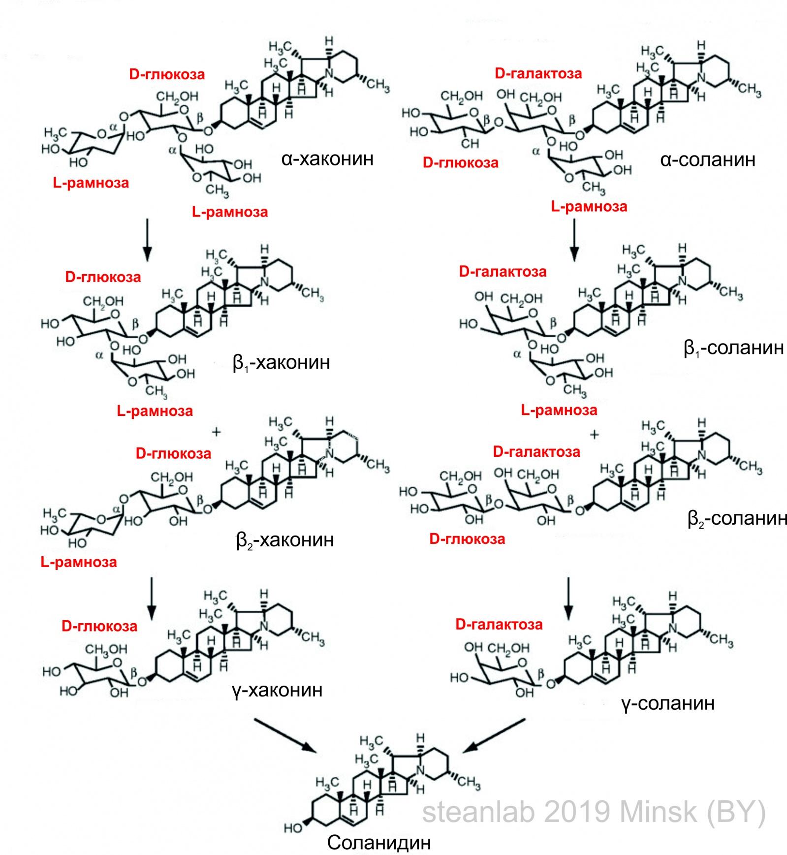 Заметки фитохимика. Картофель. Часть третья. «Бульба Фугу» или СОЛАНИН - 3