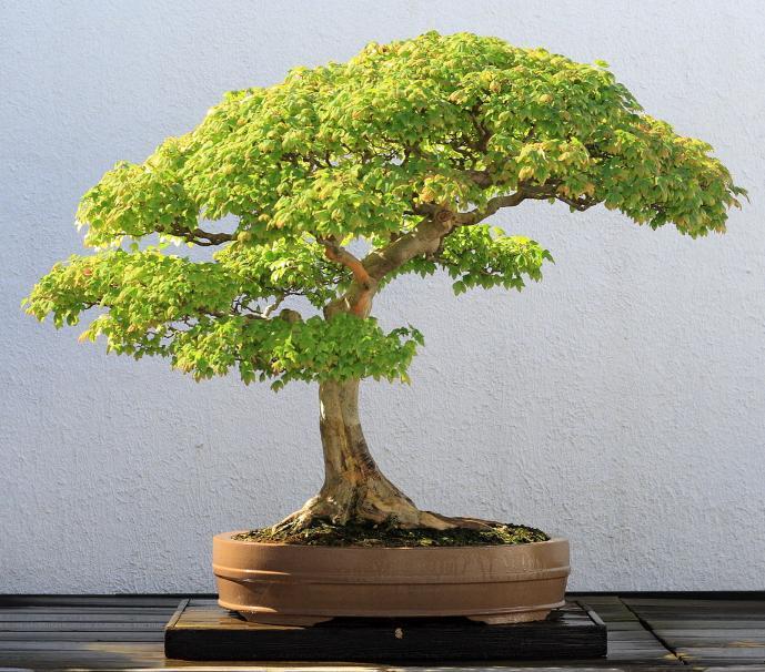 Bonsai: фамильный вики-движок - 2