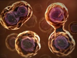 Борьба со старением: cенолитики и заместительная терапия стволовыми клетками - 1