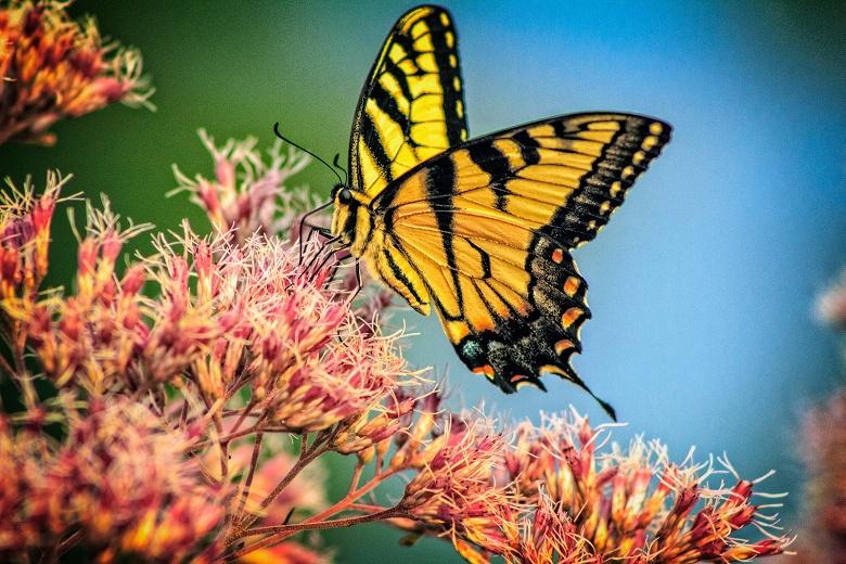 По мнению ученых, в течение столетия могут исчезнуть все насекомые