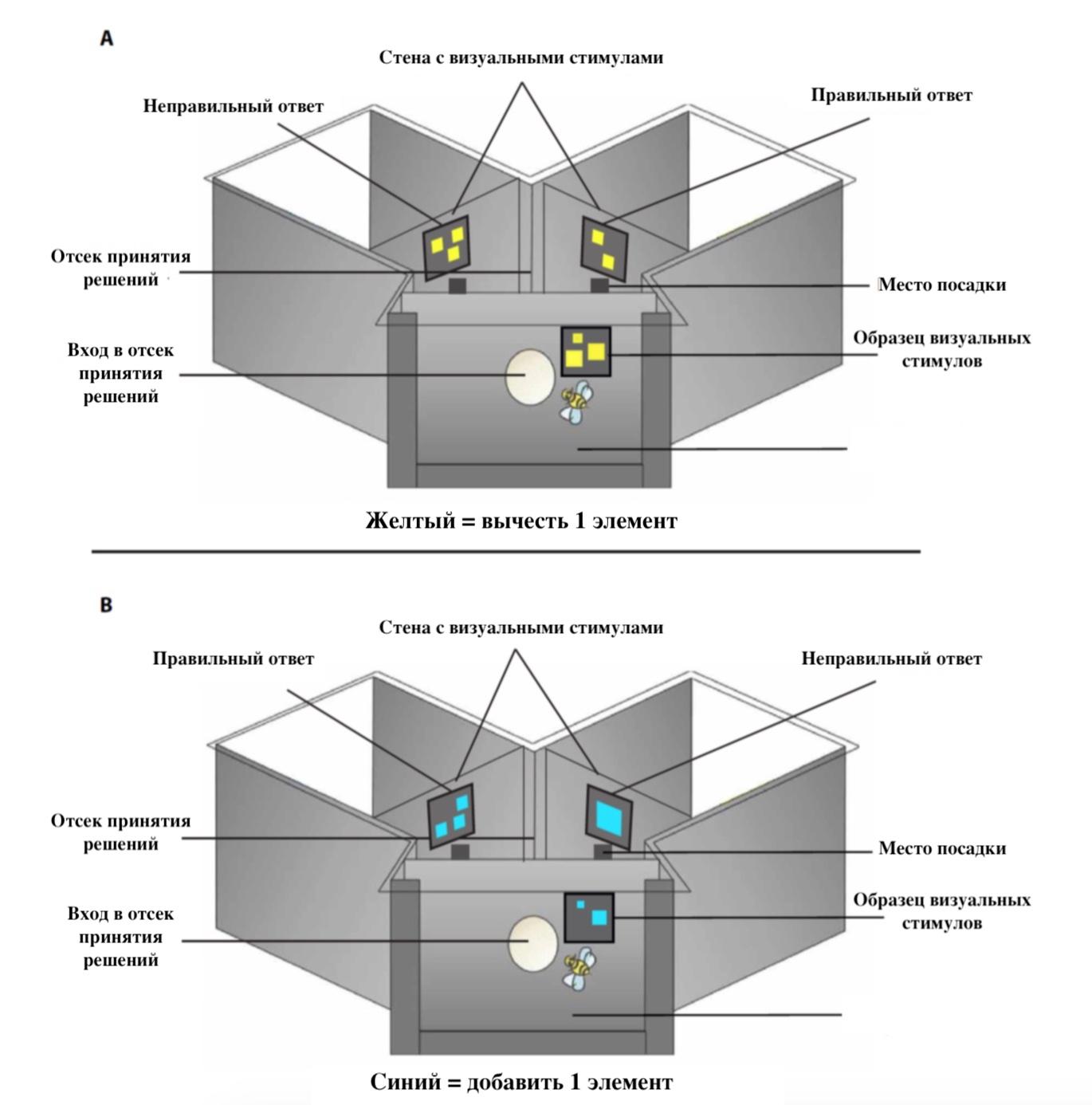 Медовая арифметика: сложение и вычитание в исполнении пчел - 3