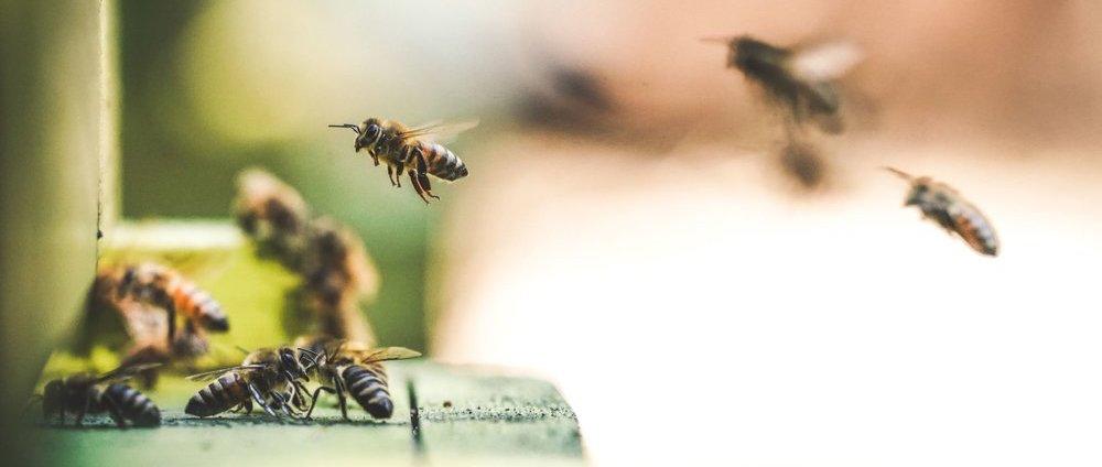 Медовая арифметика: сложение и вычитание в исполнении пчел - 1