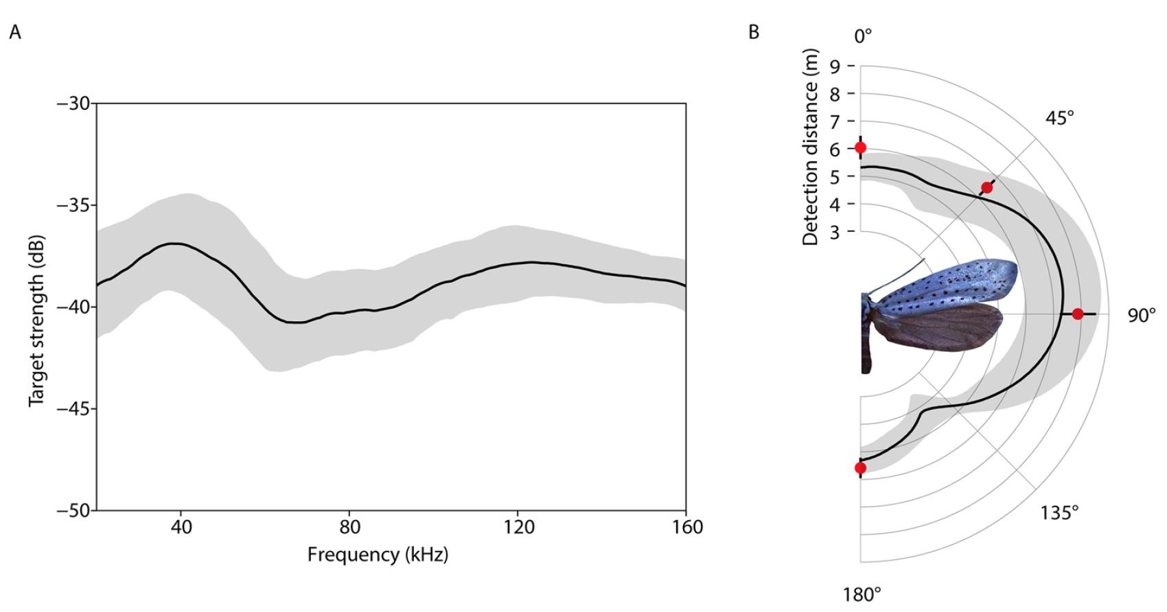 Звуковая диверсия: механизм генерации ультразвуковых щелчков у ночных мотыльков как защита от летучих мышей - 8