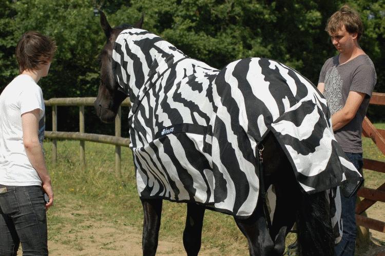Полосатые накидки на однотонных лошадях уменьшили количество налетов мух на покрытые части тела